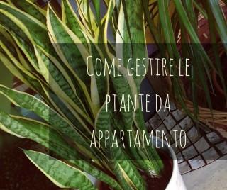 Come gestire le piante da appartamento