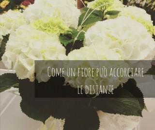 Come un fiore può accorciare le distanze