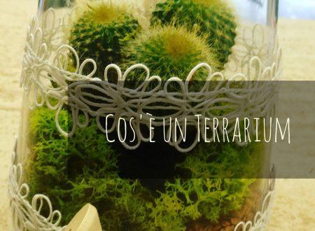 Cos'è un Terrarium