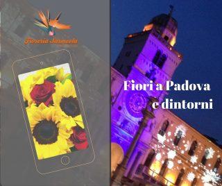 Fiori a Padova e dintorni