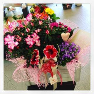 composizione con piante fiorite