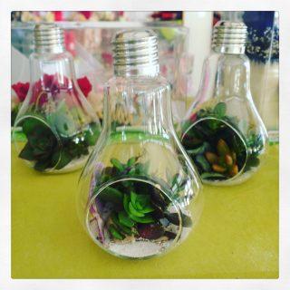 lampadine e succulente