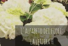 L'alfabeto dei fiori: la lettera H