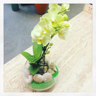 orchidea confezionata a tema mare