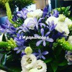 Agapanthus, un fiore del Sud Africa