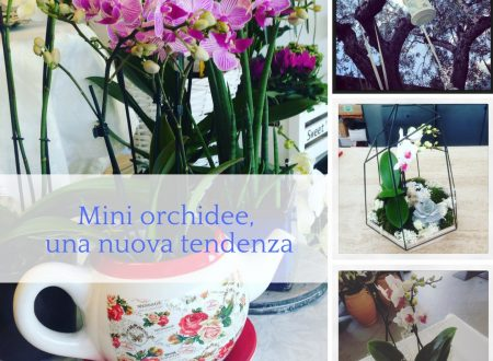 Mini orchidee, una nuova tendenza