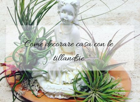 Come decorare casa con le tillandsie