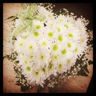 cuore crisantemina bianca