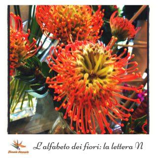 L'alfabeto dei fiori_ la lettera N