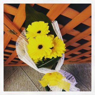 La gerbera, un fiore per decorare casa