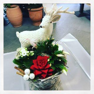 composizione in cesto con piante natalizie e Renna bianca