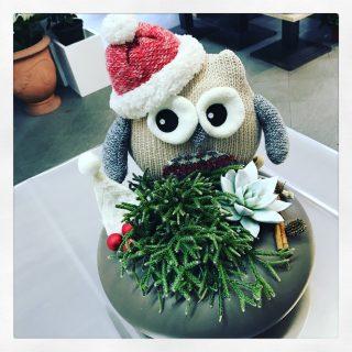 Civetta o gufo natalizio con piante grasse succulente