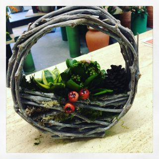 composizione di piante per Natale e non solo