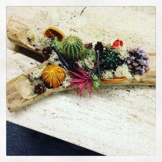 composizione con succulente su legno