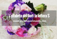 L'alfabeto dei fiori: la lettera S