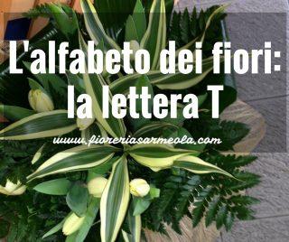 Fiori Bianchi 11 Lettere.L Alfabeto Dei Fiori La Lettera T Idee Fiorite