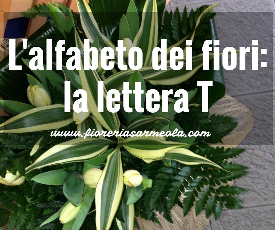 Fiori Bianchi Con 11 Lettere.L Alfabeto Dei Fiori La Lettera T Idee Fiorite