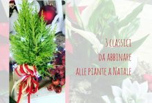 3 classici da abbinare alle piante a Natale