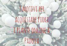 3 motivi per acquistare fiori e piante online a Padova
