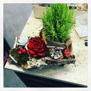 composizioni Natale con sughero pino e succulente