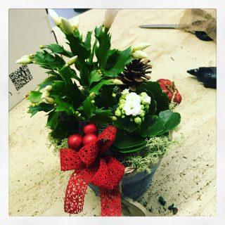 composizione con cactus Natale e Kalanchoe o calancola