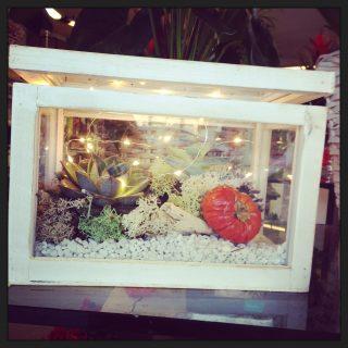 Teca di vetro con succulente Decori natalizi con pigne, arance e cannella