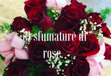 50 sfumature di rose.