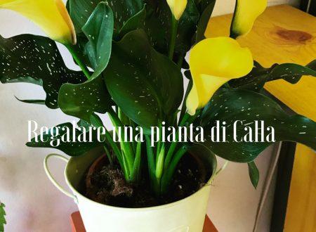 Piante di calle archives idee fiorite for Calla pianta