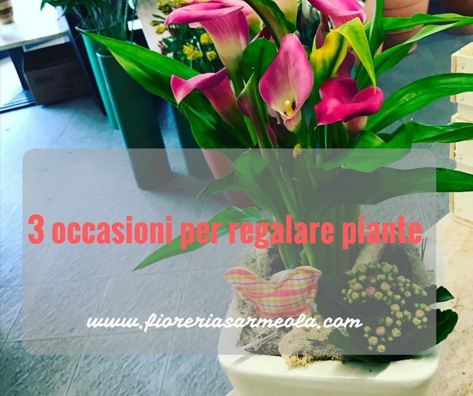 3 occasioni per regalare piante idee fiorite - Piante regalo ...