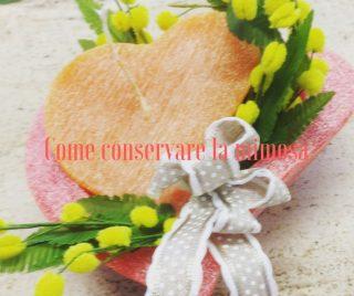 Come conservare la mimosa