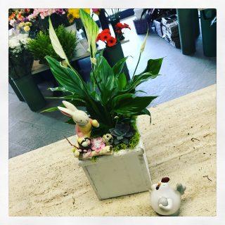 composizione Pasquale con succulenta, spatifillum e coniglietto