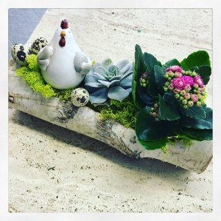 Succulenta, Calanchoe e gallina con ovetti per Pasqua