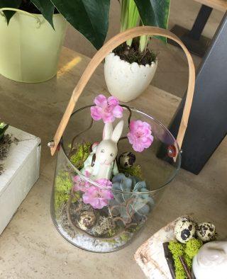 succulenta con coniglietto pasquale in vaso di vetro