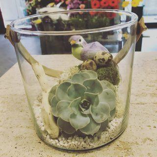succulenta con nido e uccellino  in contenitore di vetro