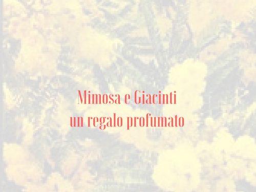 Mimosa e Giacinti un regalo profumato