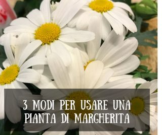 3 modi per usare una pianta di margherita