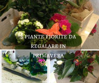 3 piante fiorite da regalare in primavera