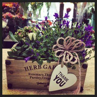 Giardino in città, composizione di piante in cassetta con piccole piante di rose, calanchoe e campanule
