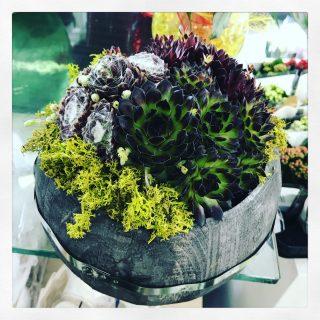 Centrotavola con succulente