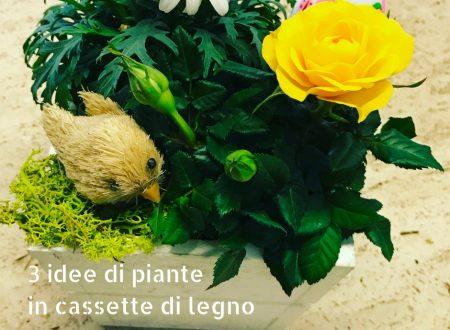 3 idee di piante in cassette di legno