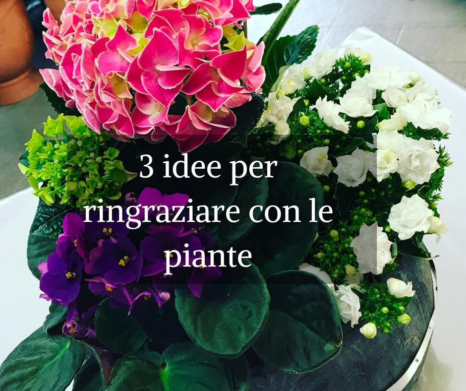 3 idee per ringraziare con le piante idee fiorite - Piante regalo ...