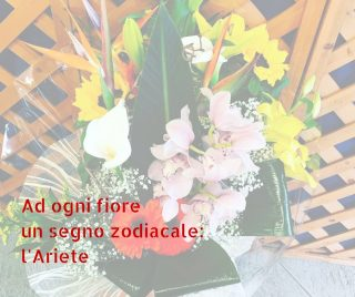 Ad ogni fiore un segno zodiacale: l'Ariete