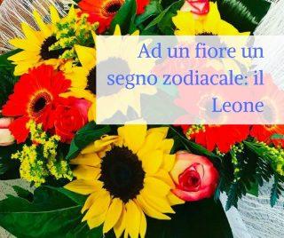 Ad un fiore un segno zodiacale: il Leone