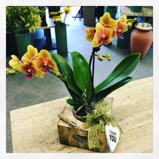 Orchidea in cassetta di legno con porta candela