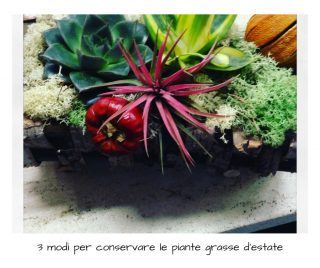 3 modi per conservare le piante grasse d'estate