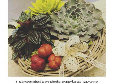3 composizioni con piante aspettando l'autunno