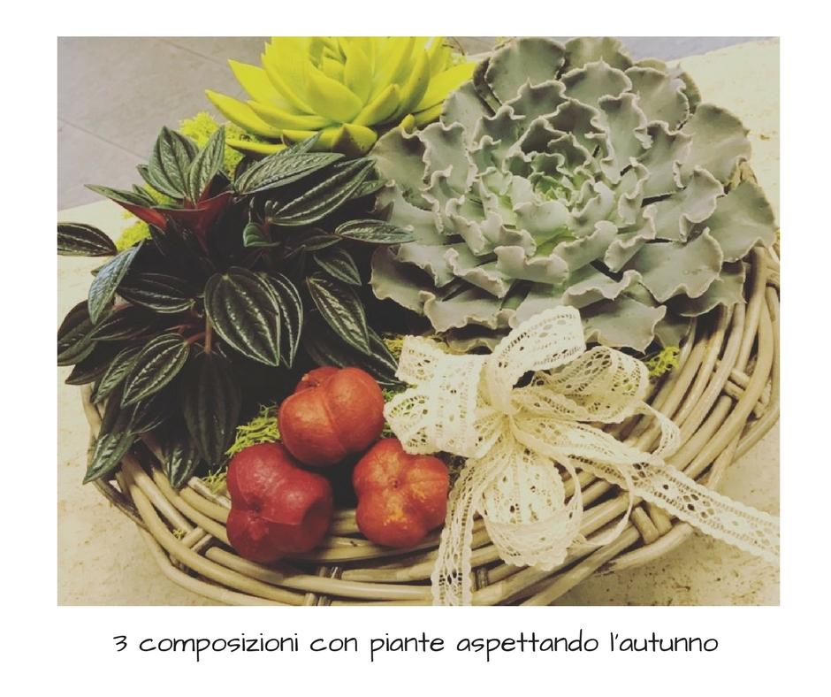 3 composizioni con piante aspettando l 39 autunno idee fiorite for Pianta con la i
