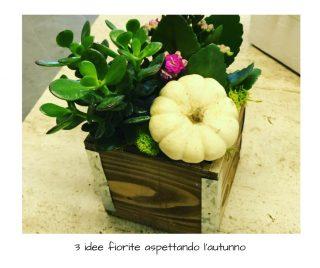 3 idee fiorite aspettando l'autunno