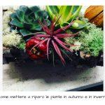 Come mettere a riparo le piante in autunno e in inverno