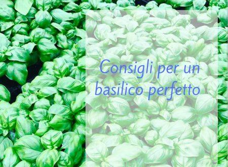 Consigli per un basilico perfetto